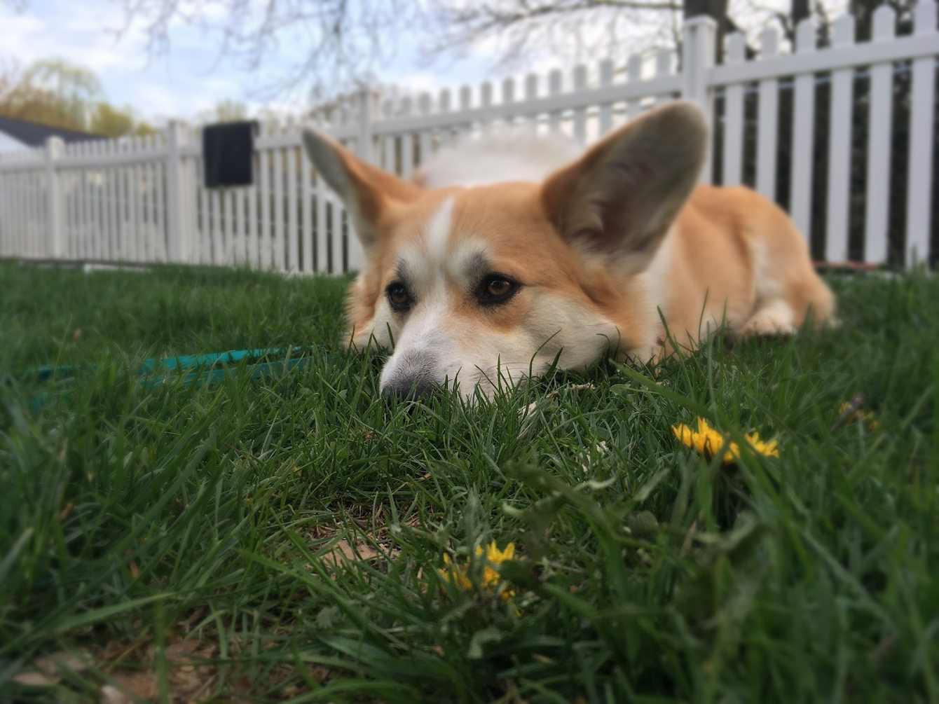 How to Choose a Fence for Your Dog